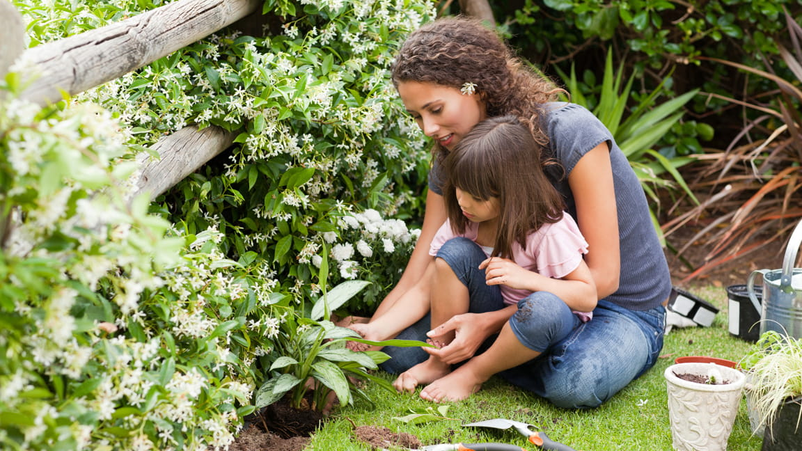 Image result for growing garden