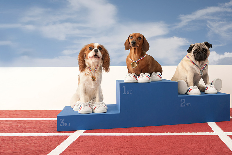 winning dogs on medals stand