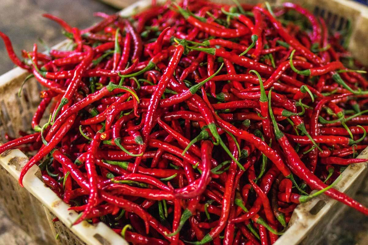 fresh chili peppers in a box