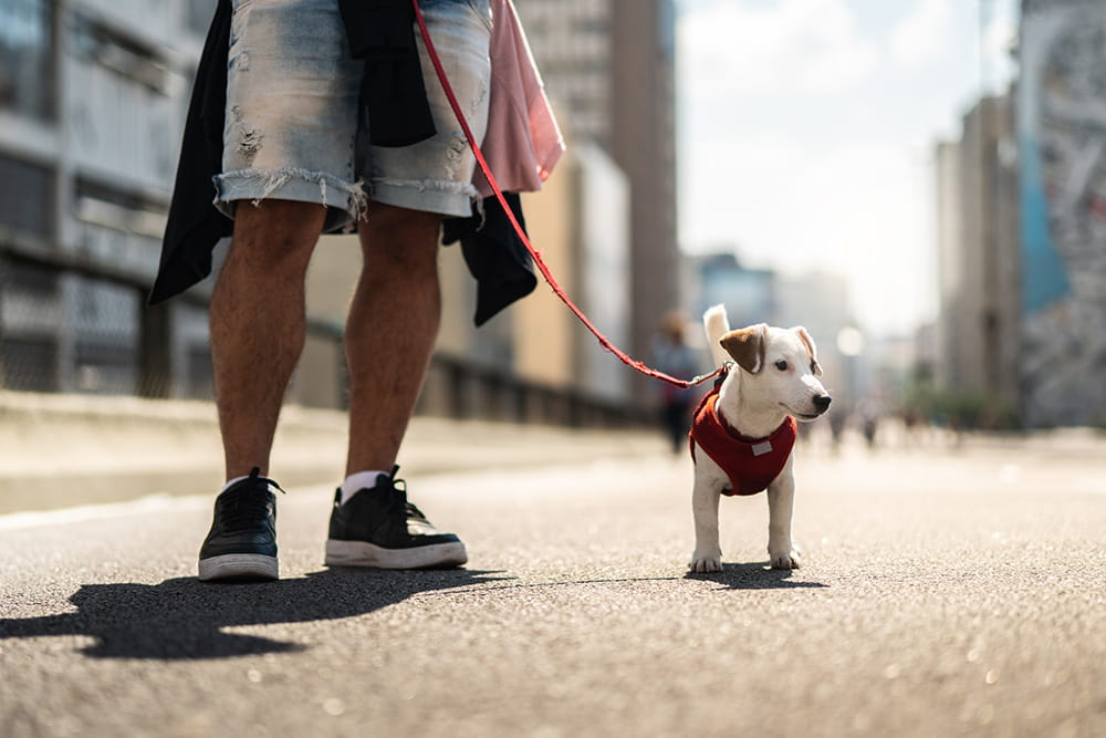 What Are The Reasons To Go For A Healthcare Routine For Your Dog