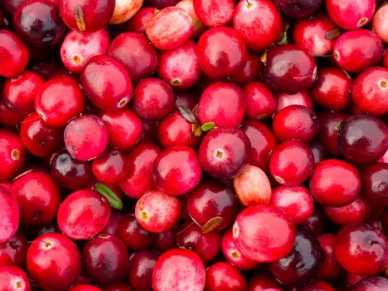 """Résultat de recherche d'images pour """"cranberries"""""""