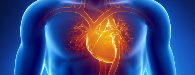 Image result for Long-term declines in heart disease and stroke deaths are stalling, research finds