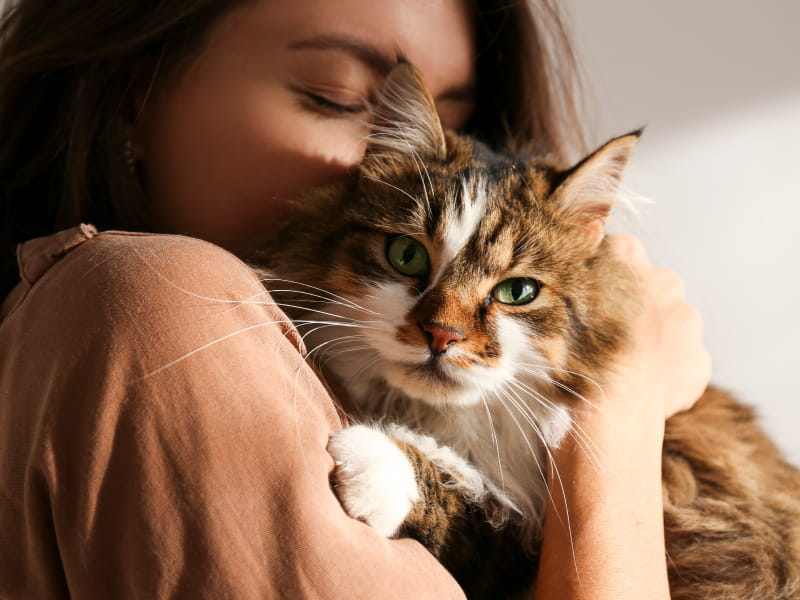 Want your cat to stay in purrrfect health? Watch out for heart disease    American Heart Association