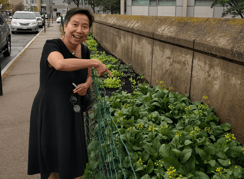 Anh Vu Sawyer at an urban garden planted at the Worcester Public Library in 2017. (Photo courtesy of Anh Vu Sawyer)