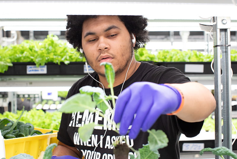 A student working in a Teens for Food Justice farm. (Photo courtesy of Teens for Food Justice)